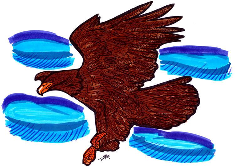 Adler Tuschedetails koloriert