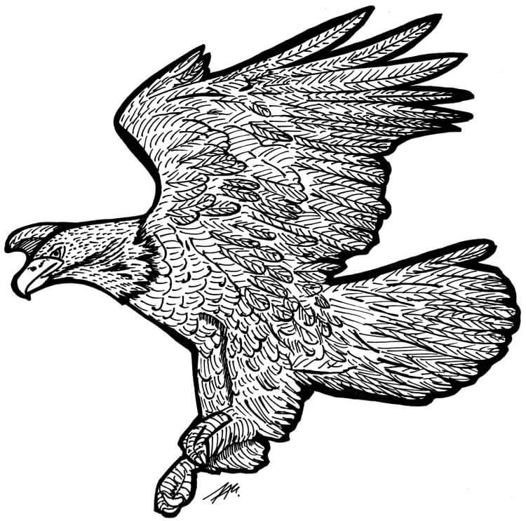 Adler Tuschedetails