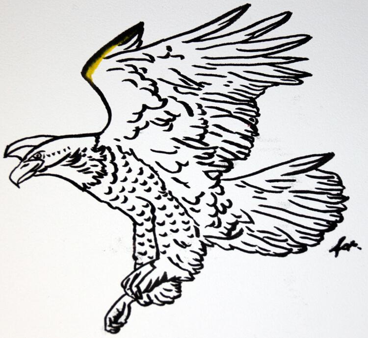 Adlerzeichnung Tuschekonturen Detail