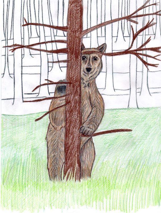 Bär hinter einem Baum - Kolorierung mit Buntstift