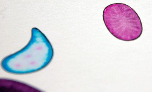 Aborigini Eidechse - Kolorierung Detail 2