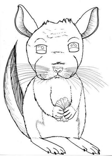 Chinchilla Zeichnung Tuschekonturen