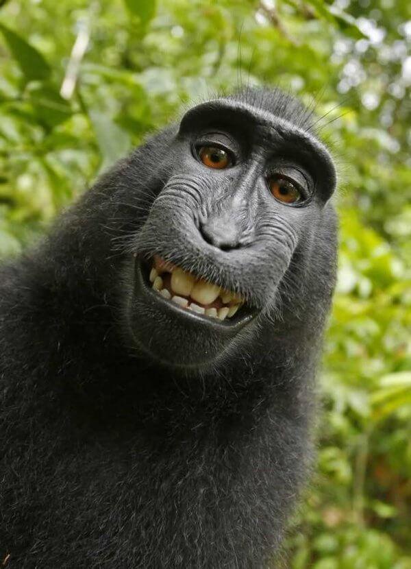 Affen Selfie