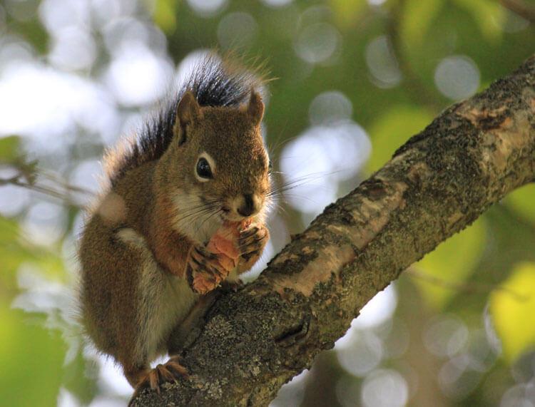 tier abc e wie eichhörnchen  eichhörnchen zeichnen