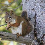 Fotovorlage zum Abzeichnen: Eichhoernchen auf Baum