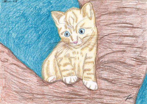2008 - Katze auf Baum