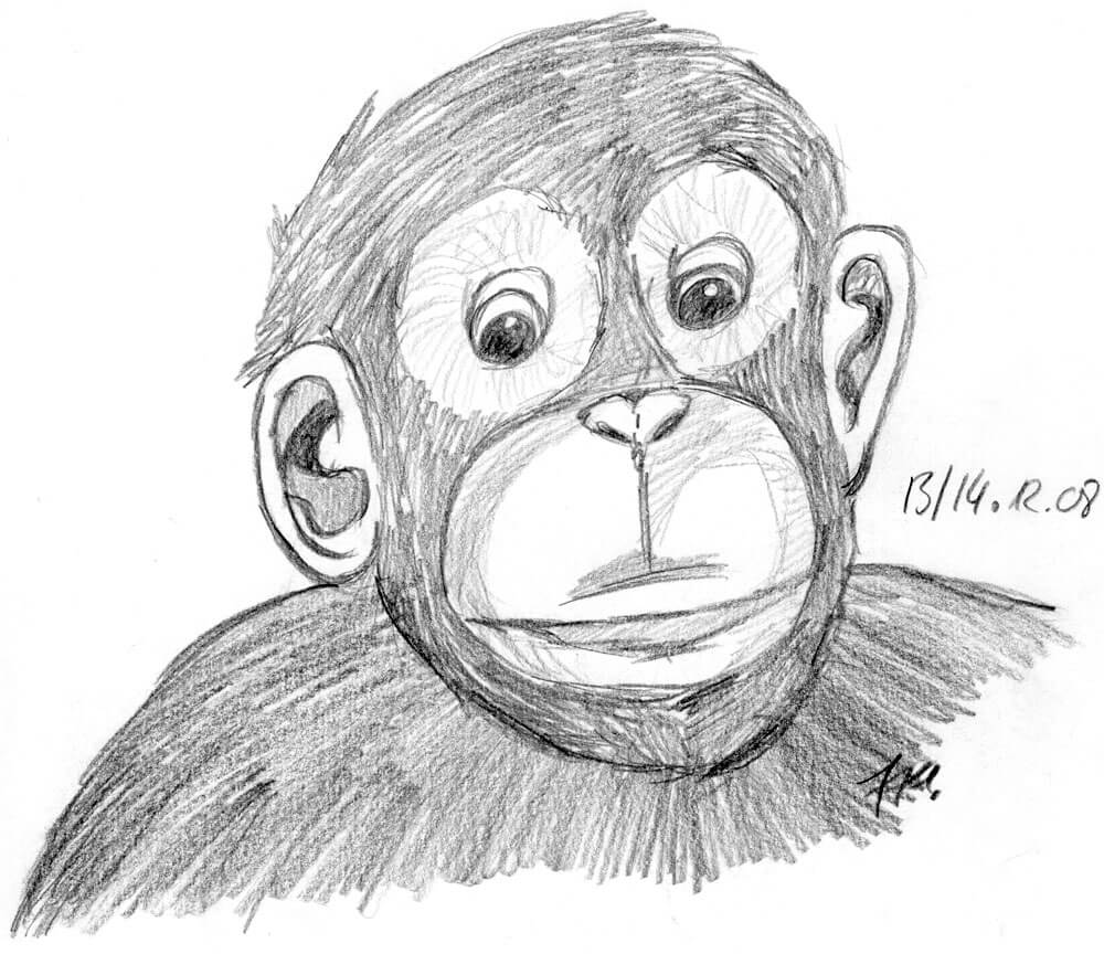 2008 - Schimpansenportrait