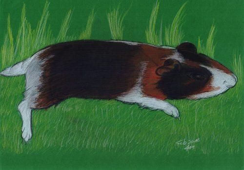 2012 - Meerschweinchen mit Pastell