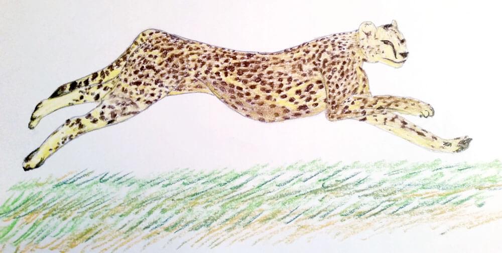Gepard Pastellmalerei fertig