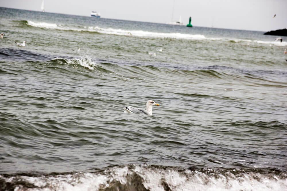 Ostsee Strand & Meer mit Möwe