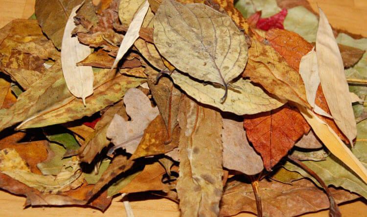 Blätterhaufen (Getrocknetes Laub)