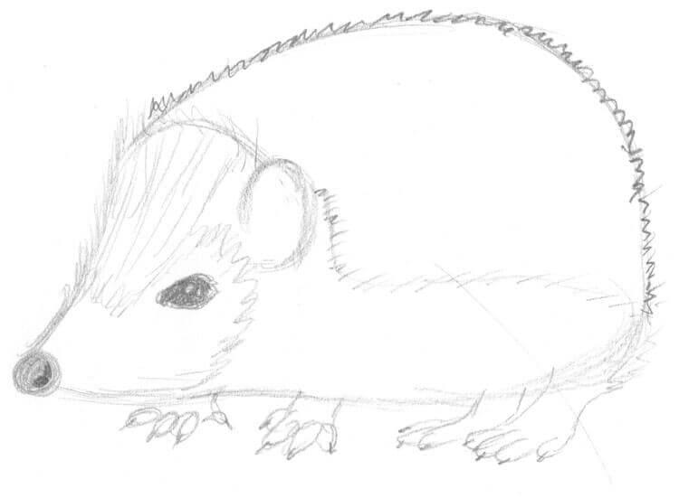 tier abc: i wie igel - igel zeichnen und malen lernen