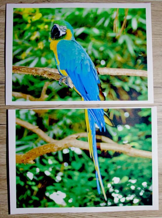 Papageienfoto als Poster ausgedruckt