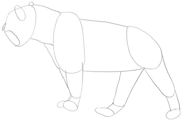 Jaguar Bleistift Skizze