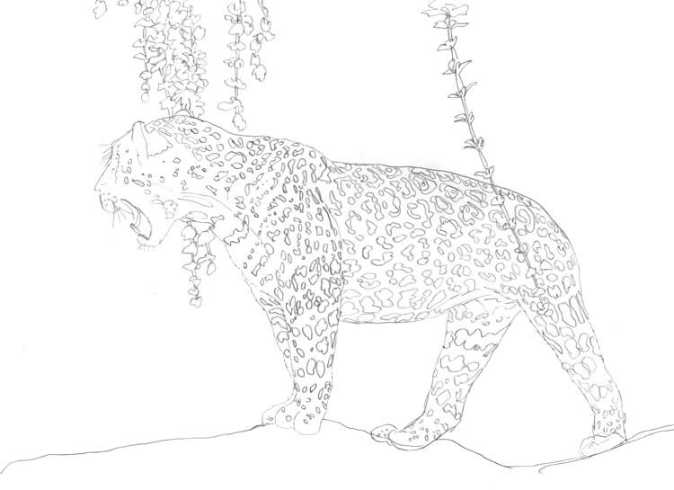 Jaguar Bleistift Vorzeichnung