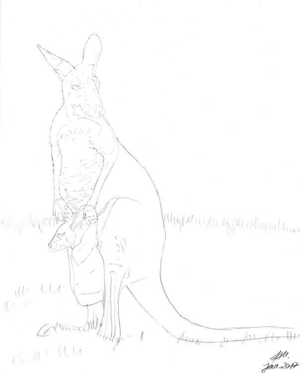 Bleistiftzeichnung von einem Känguru