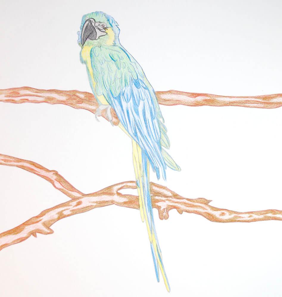 Ungewöhnlich Papagei Färbung Bilder Bilder - Beispiel Business ...