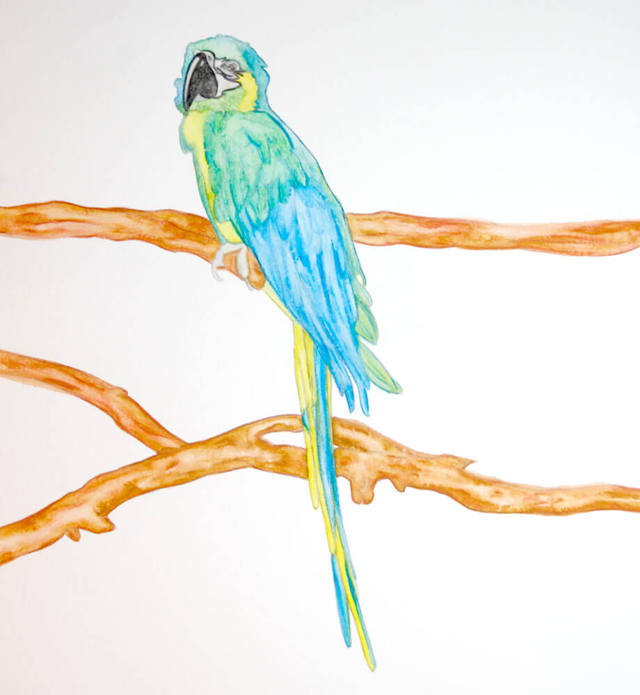 Aquarellmalerei Papagei Schritt Fur Schritt Die Entstehung