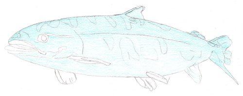 Aquarellbuntstift Kolorierung 1