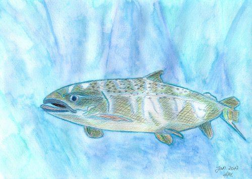 Aquarellbuntstift Kolorierung