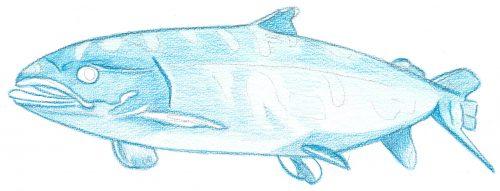 Aquarellbuntstift Kolorierung 2