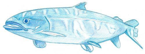 Aquarellbuntstift Kolorierung 3