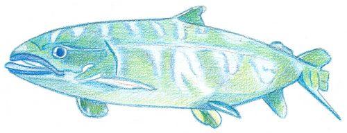 Aquarellbuntstift Kolorierung 4