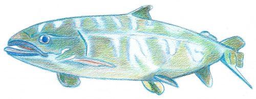 Aquarellbuntstift Kolorierung 5