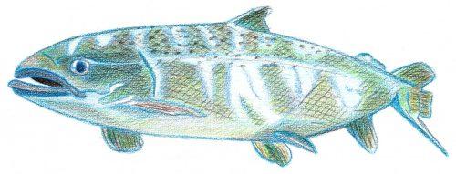 Aquarellbuntstift Kolorierung 6