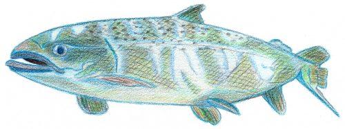 Aquarellbuntstift Kolorierung 7