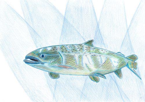Aquarellbuntstift Kolorierung 8