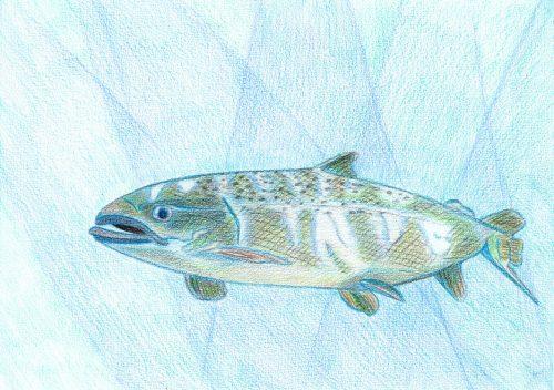 Aquarellbuntstift Kolorierung 9