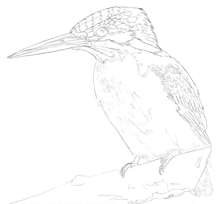 Eisvogel zeichnen Skizze