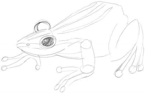 Frosch zeichnen 3 - Skizze