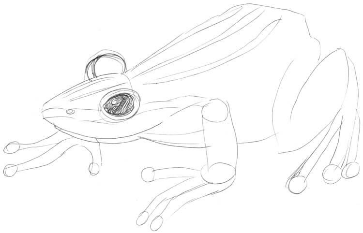 Zeichenanleitung: Frösche und Kröten zeichnen