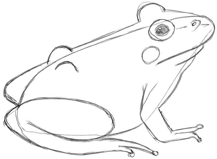 Zeichenanleitung: Frösche und Kröten zeichnen lernen
