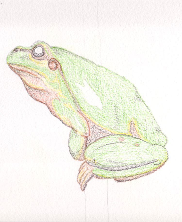 Frosch Aquarell malen mit DERWENT Inktense & Academy ...