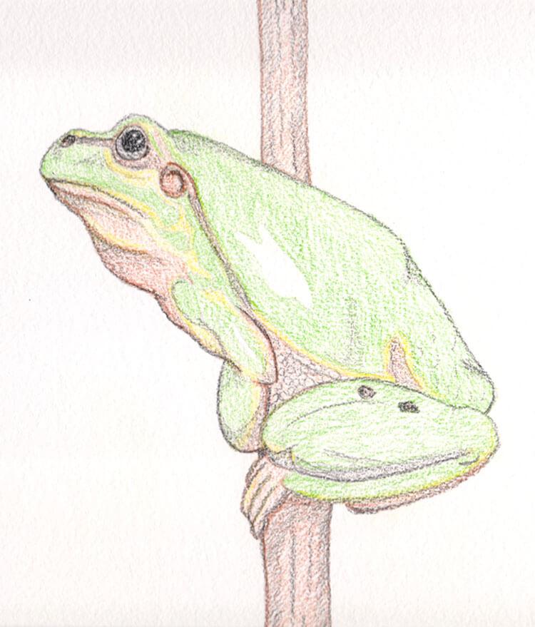 Inktense Frosch Aquarell