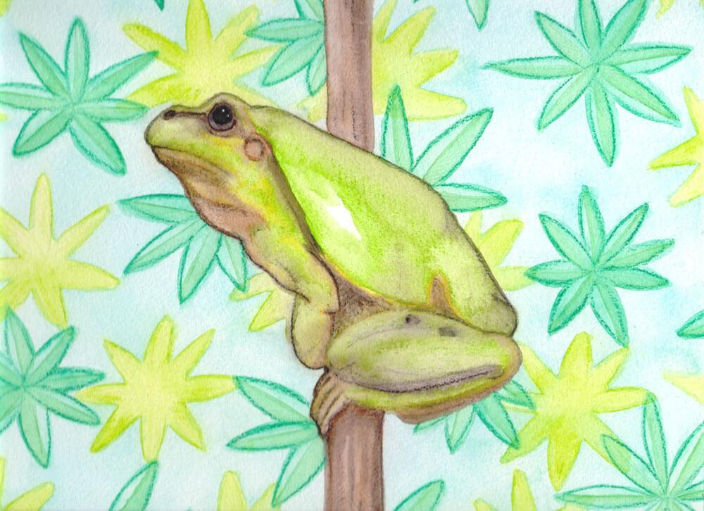 Frosch Zeichnung Kolorierung fertig