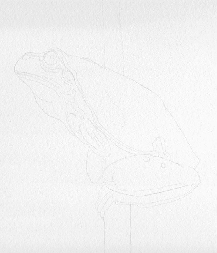 Frosch Zeichnung Bleistiftskizze