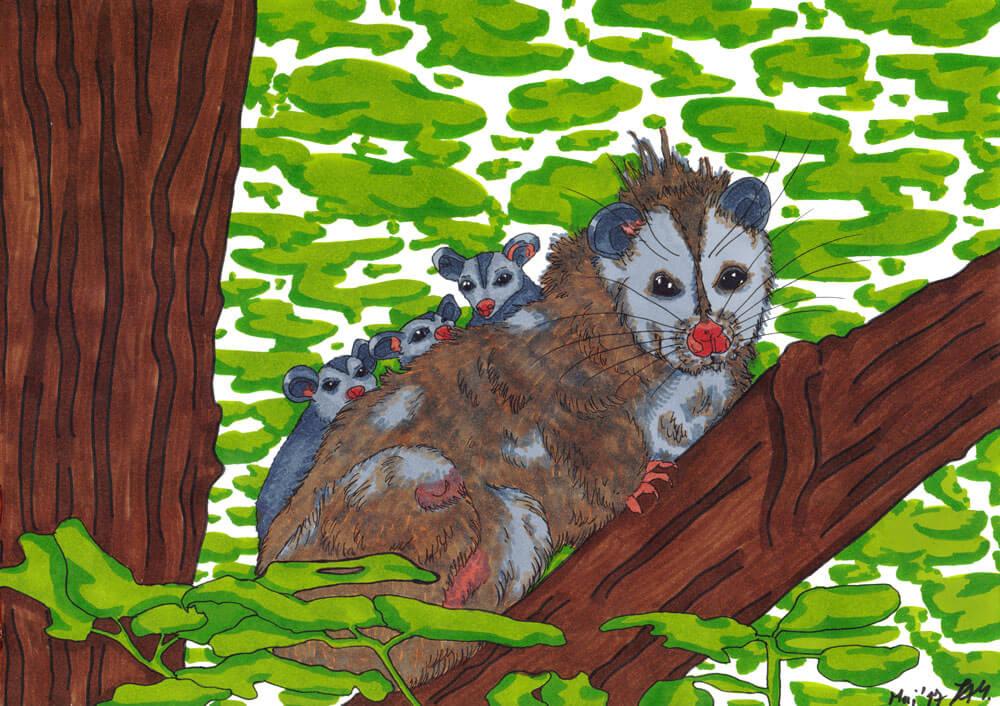 Opossum zeichnen Kolorierung fertig