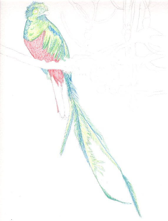 Quetzal Kolorierung mit Aquarellbuntstift 4