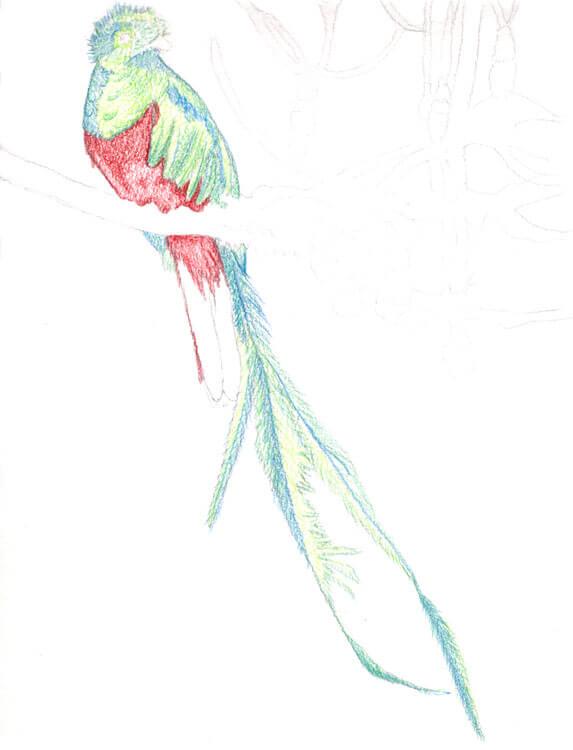 Quetzal Kolorierung mit Aquarellbuntstift 5