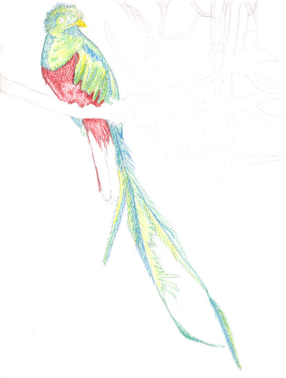 Quetzal Kolorierung mit Aquarellbuntstift 6