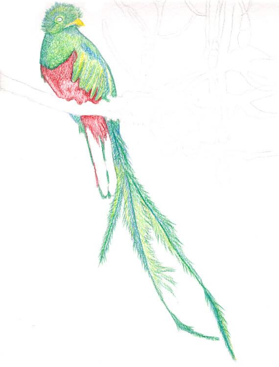 Quetzal Kolorierung mit Aquarellbuntstift 7