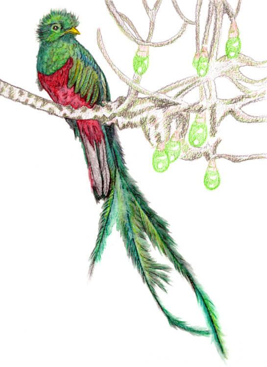 Quetzalaquarell malen 1