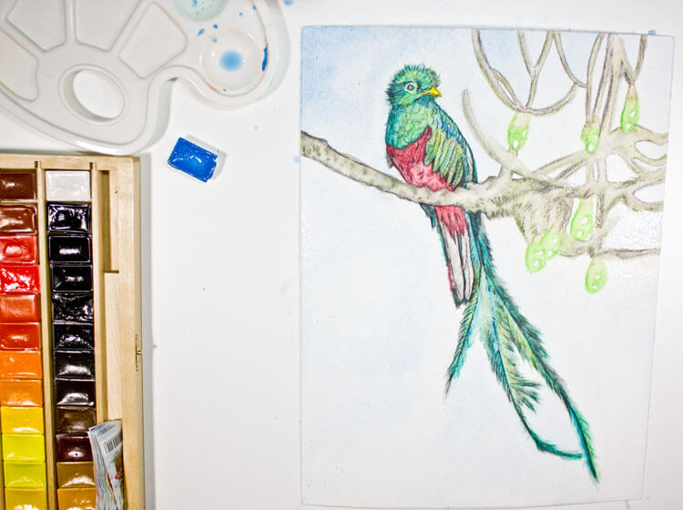 Quetzalvogel Aquarell malen - fertig