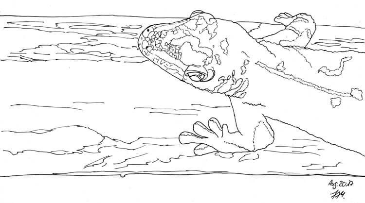 Gecko zeichnen und malen - Finelinerkontur