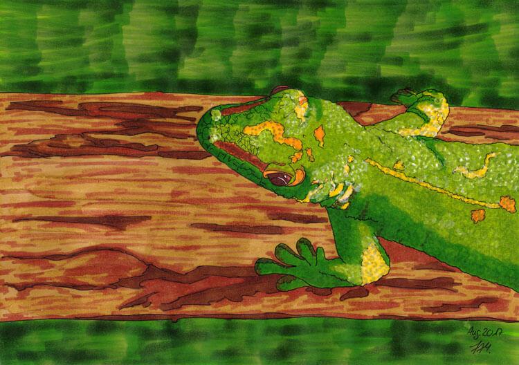 Step by step: Gecko zeichnen und malen
