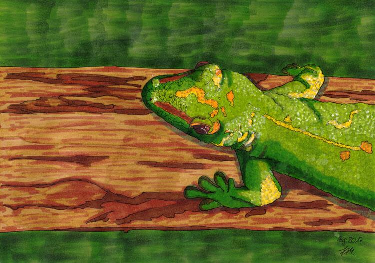 Gecko Markerzeichnung fertig